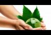 Год экологии 2017: школьный план мероприятий